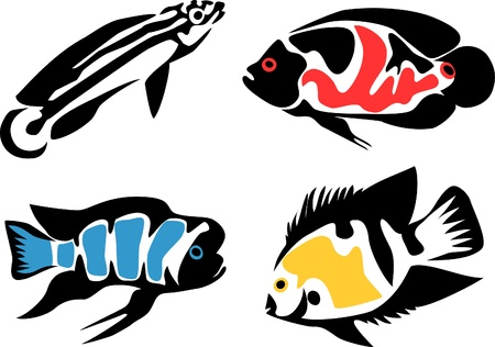 set of aquarium fishes - cichlids Vector
