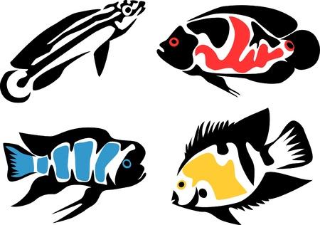 set of aquarium fishes - cichlids Stock Vector - 17031335