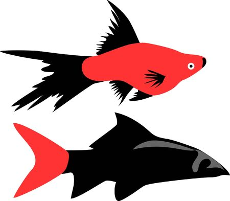aquarium fishes - red and black platyfish and labeo Stock Vector - 17031328