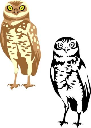 aves: burrowing owl