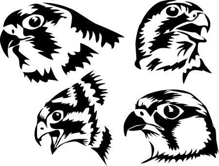 head of the falcon Stock Vector - 17120066
