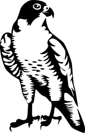 орнитология: сокол логотипа