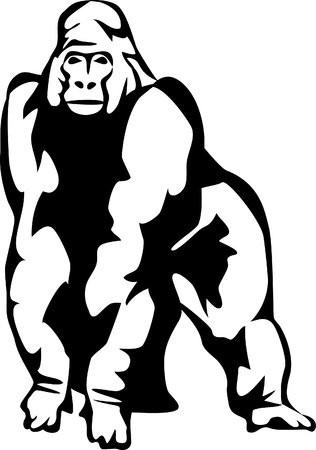 gorilla Stock Vector - 17120050