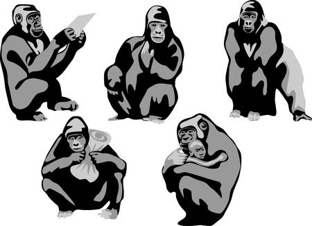 gorillas greyscale Stock Vector - 17120067