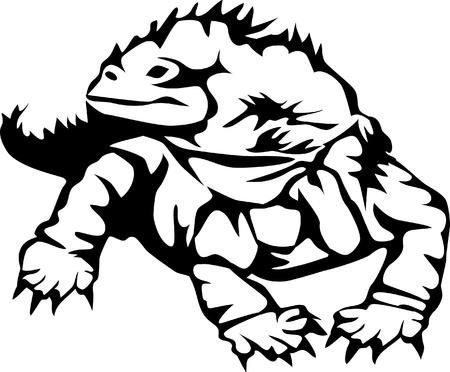 iguana lizard Stock Vector - 17271624