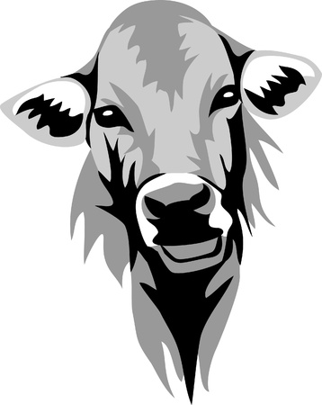 cow head: head of hornless cow