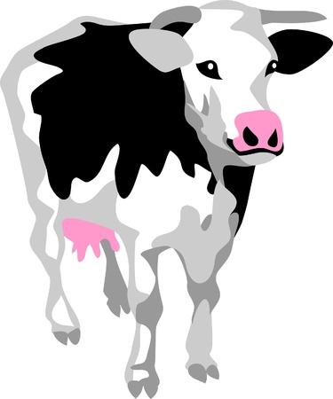 dairy cow Stock Vector - 17511250