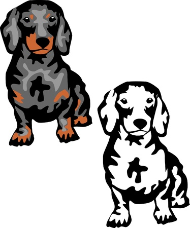 quarry: black smooth-haired dachshund Illustration