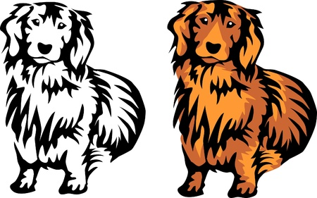 red long haired dachshund Vector