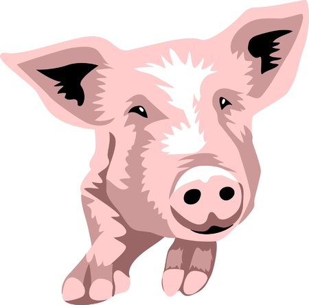 head of pig Stock Vector - 17775425
