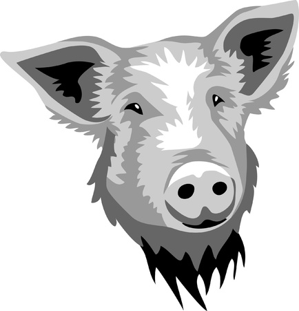 head of pig Vector