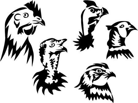 codorniz: aves gallináceas - gallina, pavo, gallina de guinea, faisanes, codornices Vectores