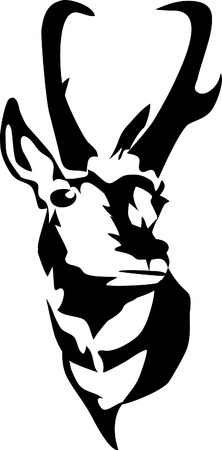 americana: head of pronghorn antelope Illustration