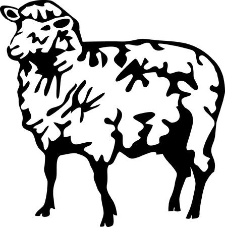 woolly: domestic sheep Illustration