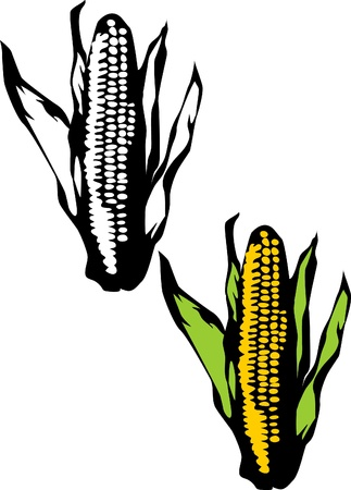 espiga de trigo: mazorca de maíz