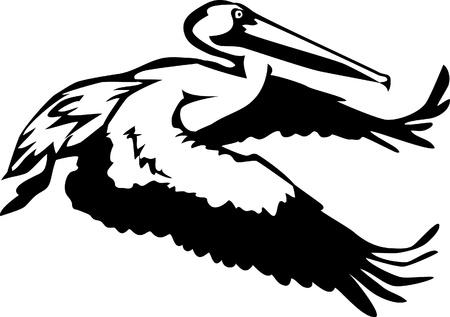pelicans: flying pelican Illustration