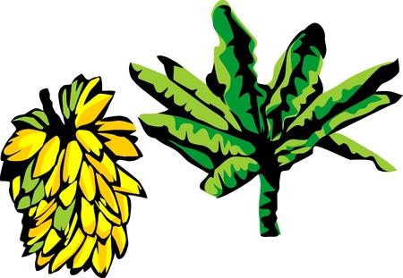 banana leaf: bunch of bananas and banana tree