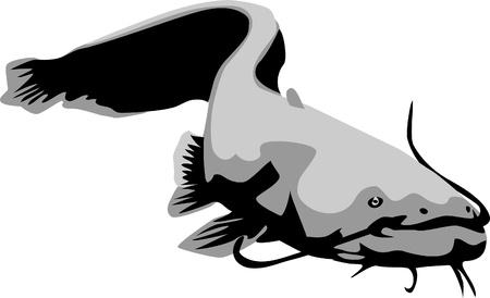 wels catfish Illustration
