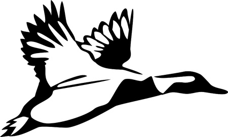 waterfowl: flying wild duck Illustration
