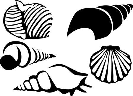 scallop: sea shells