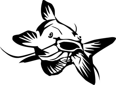 catfish: catfish
