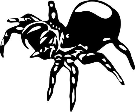 arachnophobia: black spider