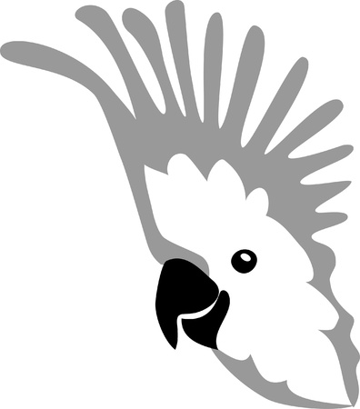 cockatoo: head of cockatoo