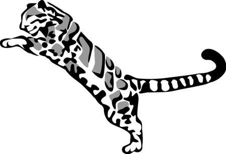 clouded leopard: clouded leopard jumping