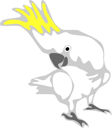 cockatoo: cockatoo Illustration