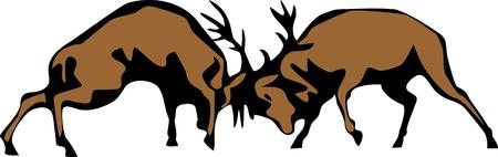 rut: fighting deers Illustration