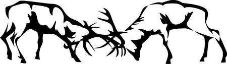 alce: combattimenti cervi Vettoriali