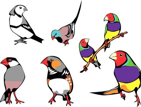 pet finches Vector