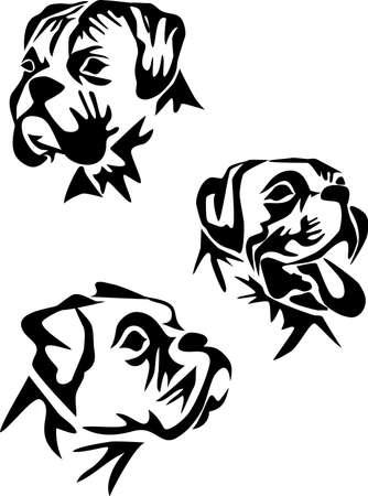 boksör: köpek kafası Çizim