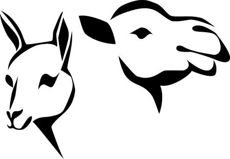 llama: head of llama and camel