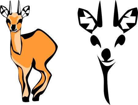 of antelope: klipspringer