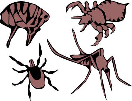 louse: flea, tick,  louse and mosquito Illustration