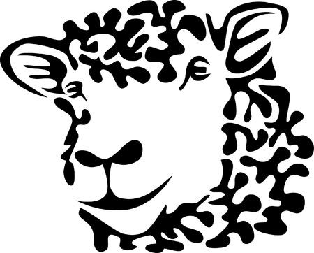 wool sheep: sheep head