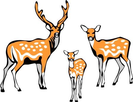 Sika herten familie Vector Illustratie