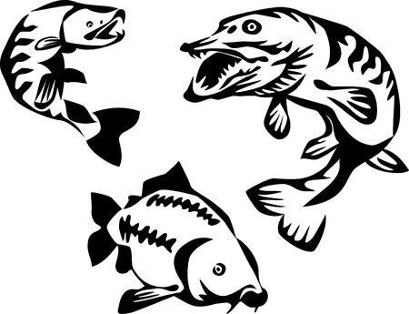 trout, pike and carp Vector