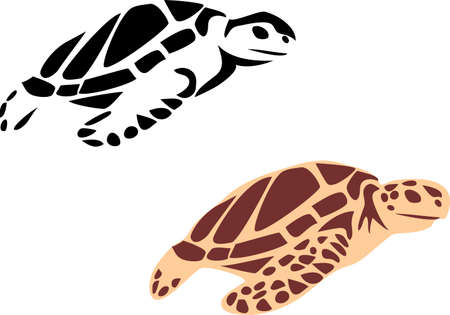 sea animals: sea turtle
