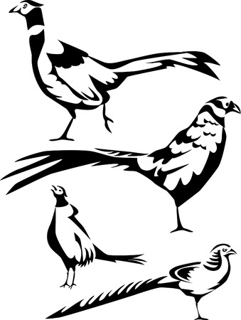 pheasants Vector Illustration