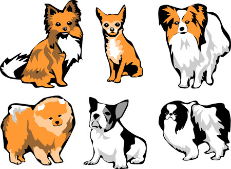 boston terrier: small dog breeds