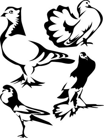 fantail: fancy pigeons Illustration