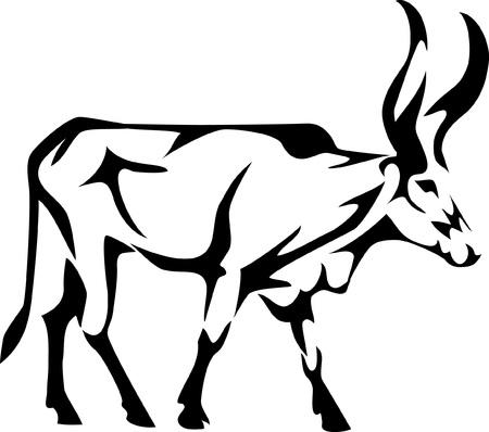 longhorn: african cattle