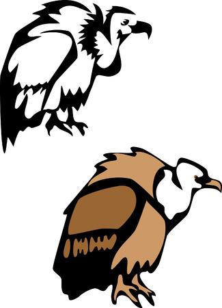 condor: vulture Illustration
