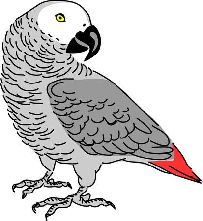 african grey parrot Stock Vector - 24990306