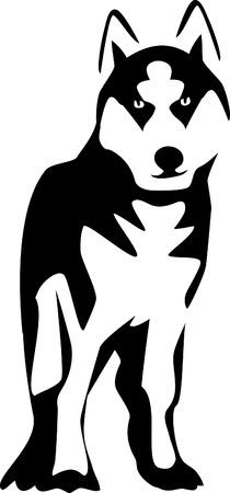 husky: malamute Illustration