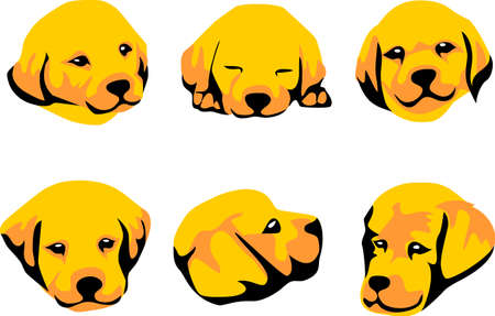golden retriever: head of golden retriever puppy Illustration