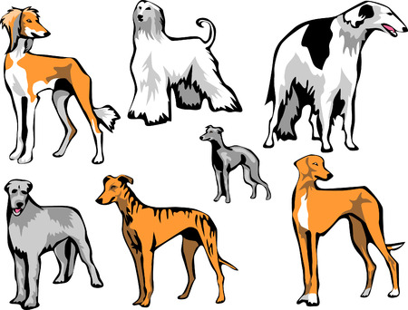 sighthounds Vector