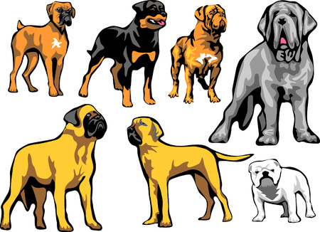 neapolitan: molosser dogs
